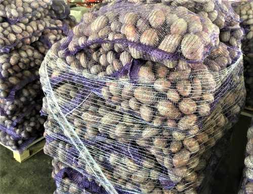 Картофель оптом сорт ред скарлетт