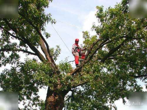 Спил деревьев (аккуратно избавим вас от угрожающих вашему имуществу де