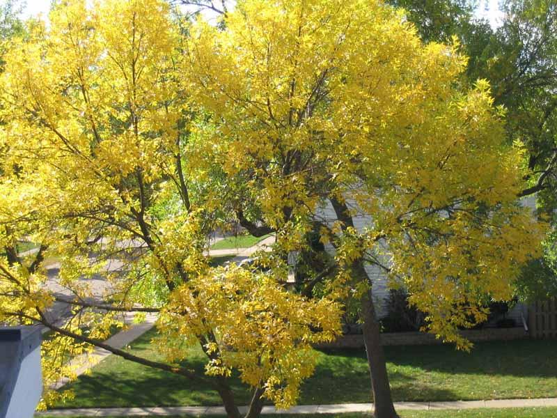 Осень в Чикаго Клицы.RU