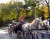 кони в Вене