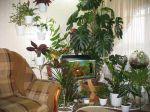 Календарь ухода за растениями: Январь