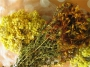 Как собирать лекарственные растения. Как обработать и сохранить собранные лекарственные растения