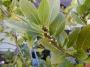 Корица. Лавровый лист. Колюрия. Мята. Пряные растения и травы