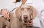 ЗООшеф предлагает: лечебный корм Hills при дерматите и пищевой аллергии у собак