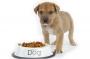 Корм для собак и здоровье четвероногих друзей