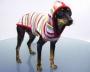 Одежда для собак почтой – востребованная услуга