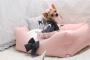 Полезные аксессуары для маленьких собачек