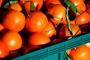 Сельскохозяйственная продукция Грузии займет достойные позиции на рынке Евросоюза
