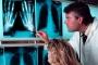 Туберкулезный артрит - симптомы и лечение