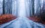 Наибольшую опасность для водителя, осенью  представляет туман!!!
