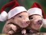 Как встречать Новый 2019 год Свиньи и какое должно быть меню