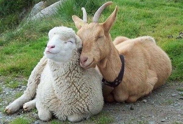 Сексуальная коза фото фото 716-715