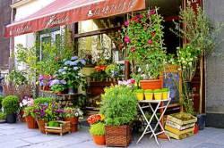 Открытие цветочного бизнеса