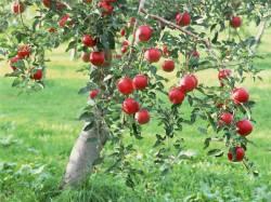 Работы в саду и на огороде в августе