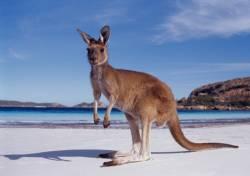 Путешествие в Австралию