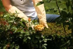 Как летом ухаживать за дачным участком?