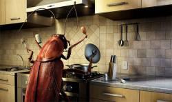 Смешная история о тараканах