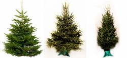 Самые большие новогодние елки