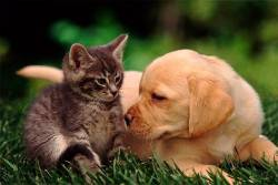Кастрация и стерилизация кошек и собак