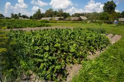Выбор участка под огород. Планирование огорода для выращивания ранних овощей