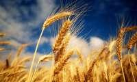 Урожай собран и подсчитан